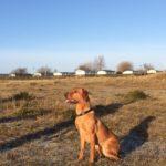 Dog Training on the Beach