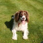 Puppy Behaviour Training Norfolk