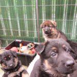 Puppy Training Norfolk