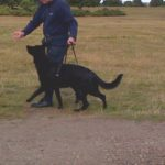 Balanced Dog Walking Training