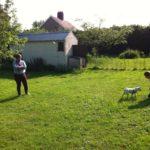 Dog Training Norwich