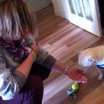 Puppy Training Norwich