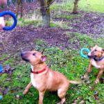 Gilda Rufus Dog Training Newmarket