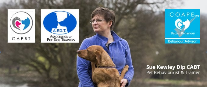 Dog Training Suffolk