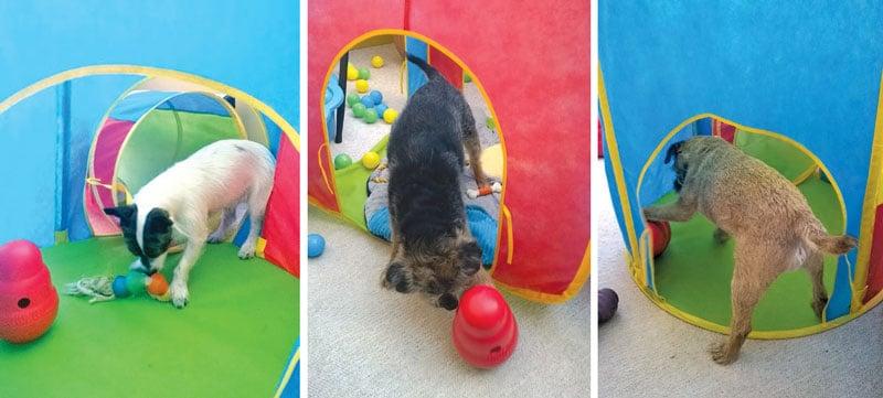 Terriers dog behaviour