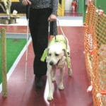 Guide Dogs - More Dog Training Heroes